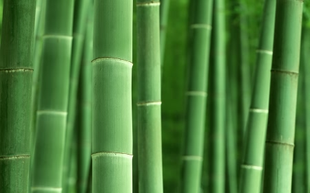 Кухооные принадлежности: купить бамбуковые подушки только красивые и качественные